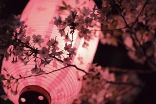 【高解像度】提灯と夜桜(サクラ)(3パターン)