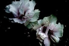 flower084