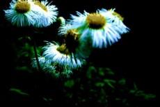 flower088