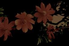 flower120
