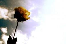 flower152