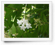 peper-curl-flower015