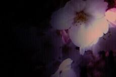 flower052