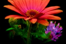 flower285