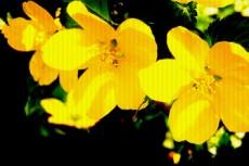 flower063
