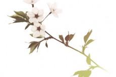 flower326