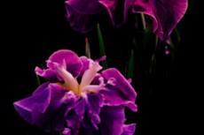 flower343