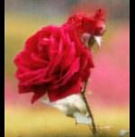 flower347