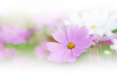 flower365