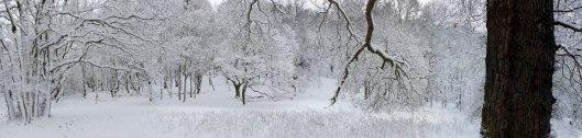 snowy_winter