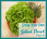 Grown Your Own Salad Bowl Part 4