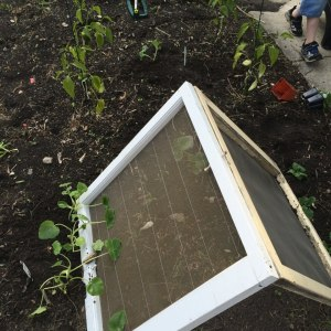 DIY upcycled A-frame trellis and a tiny urban'ish garden