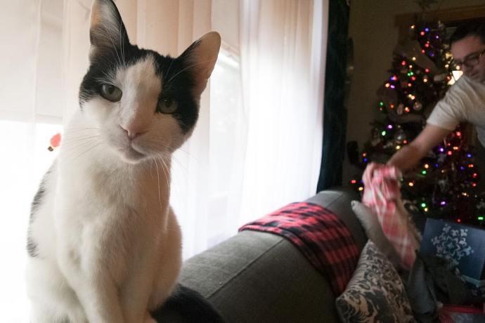 Feliz Navidad from El Gato Supremo! catsofinstagram Christmas2015 Christmas cats