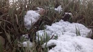 Motorola-Moto-G-Kamera-Nahaufnahme-Schnee