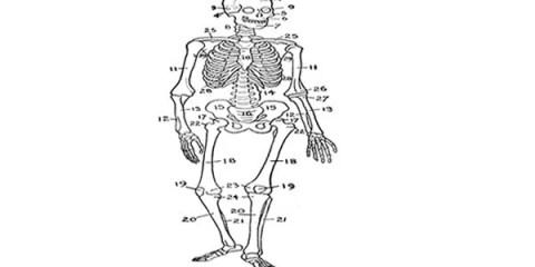 brain-body-map-skeleton