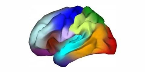 brain-map-genes-organizing