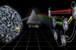 brain-network-reveals-disorders