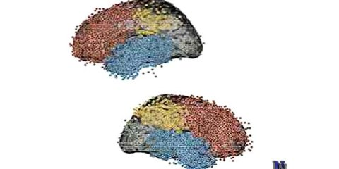 neuroscience-time-travel1