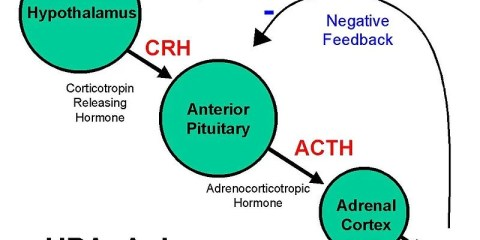the diagram shows the hpa axis.