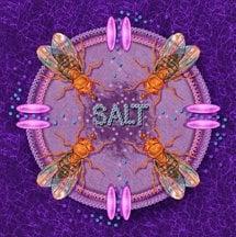 The image shows flies tasting salt.