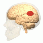 The image shows the location of the temporoparietal junction in the brain.