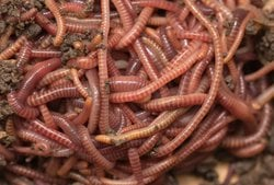 This image shows worms.
