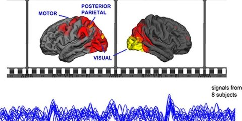 The image shows the areas of the brain light up under MEG when watching movies and also the brain wave pattern.