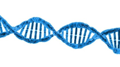 The image is a DNA double helix.