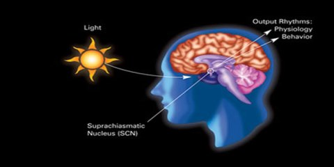 This image is a diagram illustrating the influence of dark-light rythms on circadian rythms and related physiology and behavior.