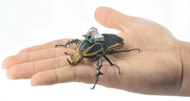 The image shows a flower beetle.