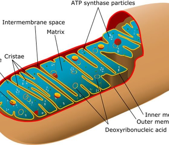 Depleted ATP Levels Causes Neural Dysfunction in Model of Neurodegenerative Disease