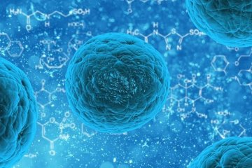 Image represents stem cells.