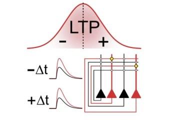 Image shows a graph of LTP.