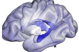 Image shows a brain blue print.