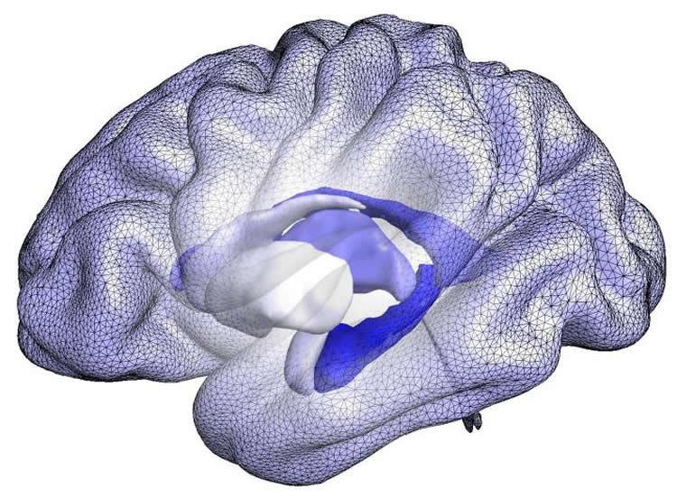 Image shows a brain blue print.