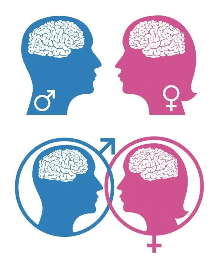 Sex differences in the brain photos 41