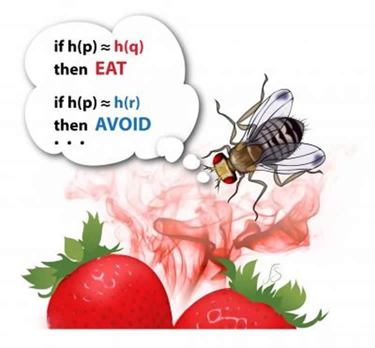 Image shows a fly on strawberries.