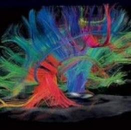Profile picture of neuroscienceforums
