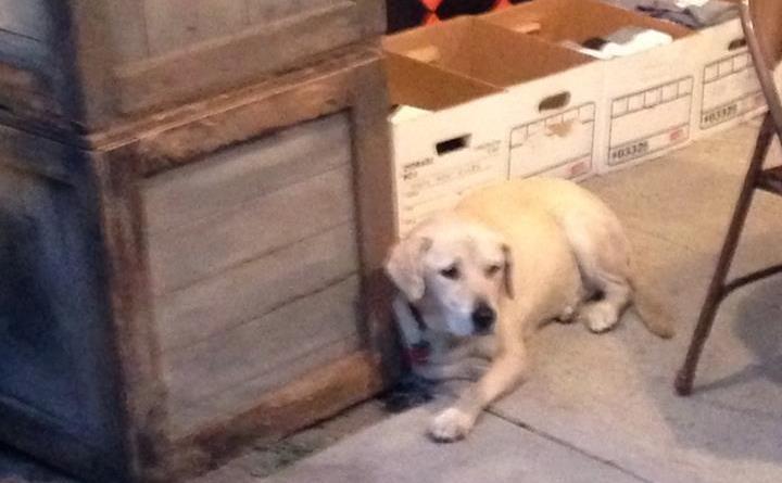 Boney Island 2015 dog