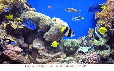 New Aquarium Information   Tropical Fish and Aquarium Advice