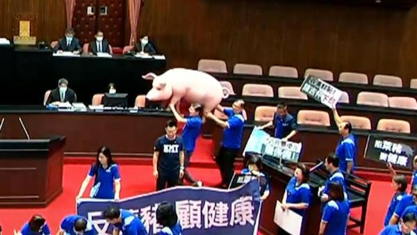 國民黨對神豬又恨又愛? 圖片來源:東森新聞