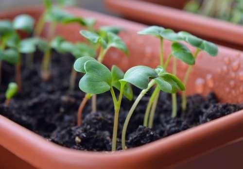 Medium Of Growing Potatoes Indoors