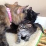 Tessa & Rue dote on kittens
