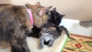 Tessa & Rue dote on kittens