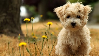 50 Free HD Dog Wallpapers
