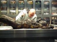 Kriminalbiologe Dr. Mark Benecke bei der Arbeit. Der vorliegenden Leiche hätte vermutlich auch keine Impfung den Tod erspart. (© Dr. Mark Benecke)