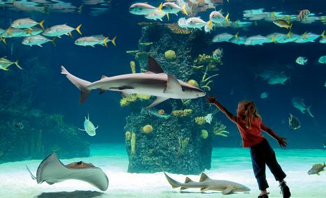 Welcome to the Newport Aquarium Career site!