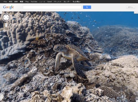 Googleマップ ウミガメ