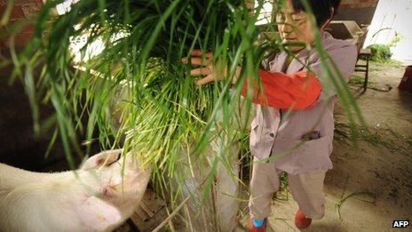 El cerdo es consumido comúnmente en la mayor parte de China