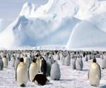 penguin antartic